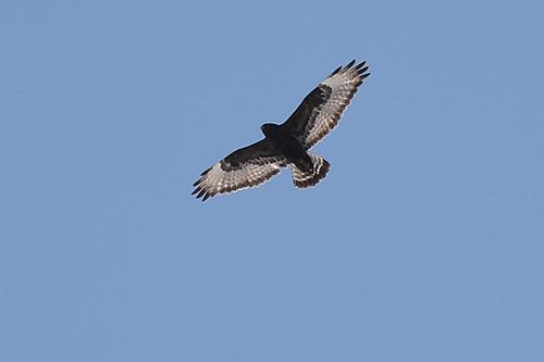 Bird Quiz - by Dave Cooney
