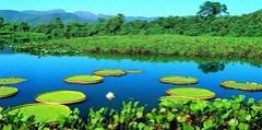 Brazil's Pantanal Wetlands