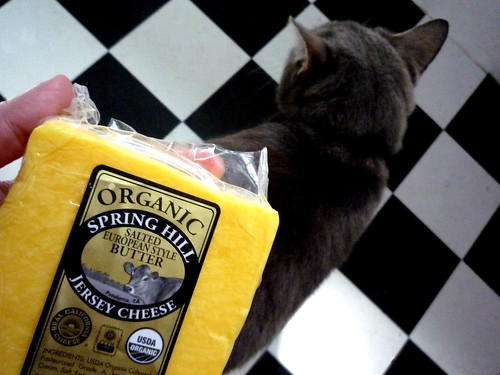 Spring Hill Cheese... and my cat who never leaves me alone.