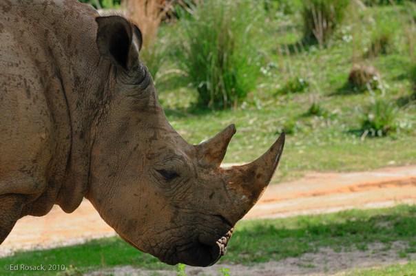 18. Rhino profile
