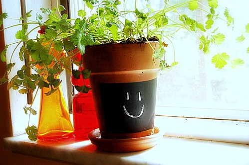 Happy Cilantro