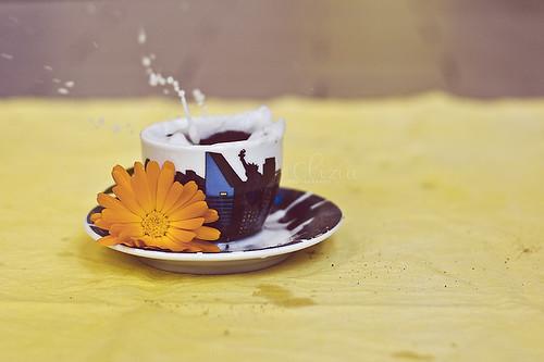 Biscuits splash! (2)
