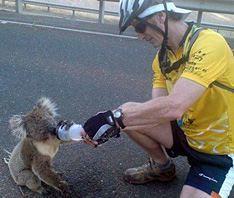 Australian Fires 2009 - Rehydrating a Koala