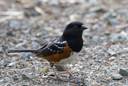 Vogel - genaueres wissen wir noch nicht