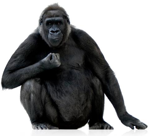 800-lb gorilla