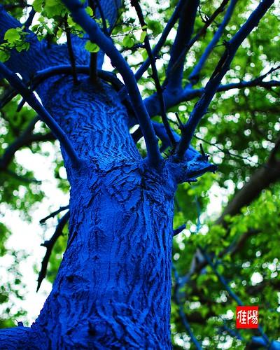 D80-CHI_BlueTrunk01_2010-05_15A