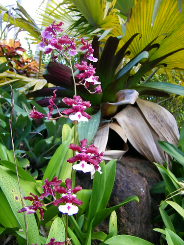 Kauai, Pflanzen, Reise, Hawaii