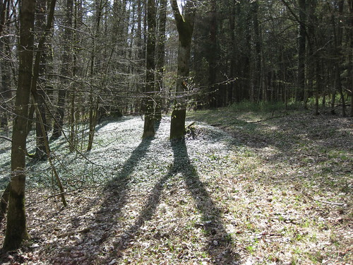 Brooding trees