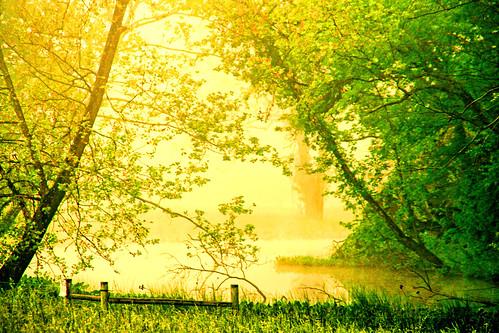 A Golden Misty Morn