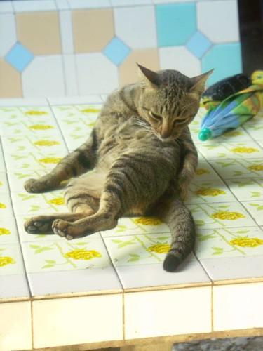 แมว น่าริกส์