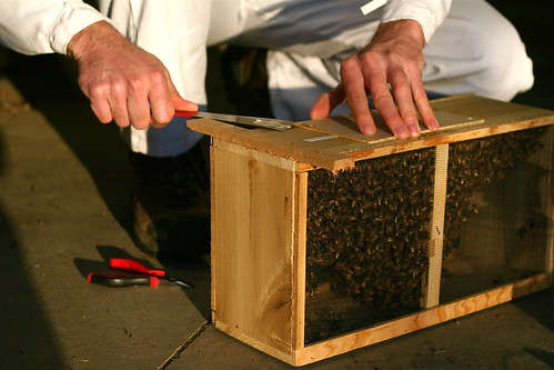 Opening the Package of Bees