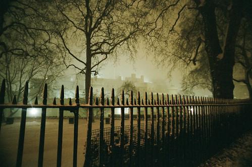 Trees, London