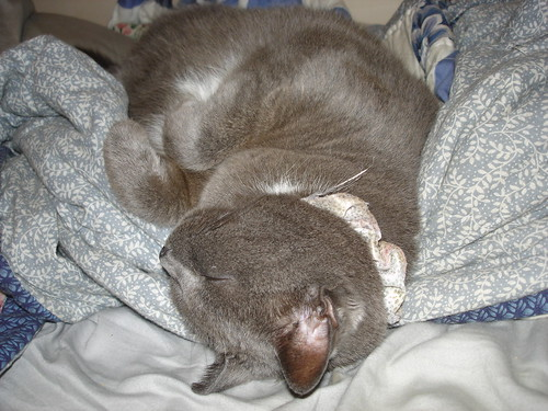 KittyQueen: Zzzzzzz...  (Dreams of cuddling.)