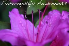 fibromyalgia awareness