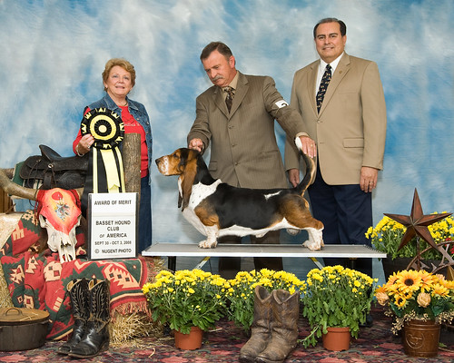 "Sire Max and Pat Harder's Barnyard Bassets AKC Champion Legends of the Fall ""Tristan"" award of merit winner at the 2008 Basset Hound Club of America Nationals Dallas, Texas"