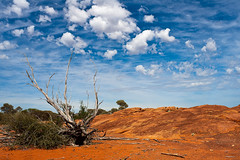 Zurück ins Outback