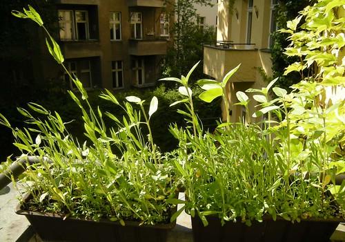 Balkon im Mai 1