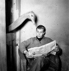 Nationaal Archief - Ostrich reads newspaper of caretaker (Flickr)