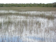 View of the Everglades
