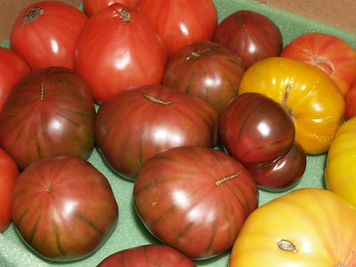 hydroponic heirloom beefsteak tomatoes