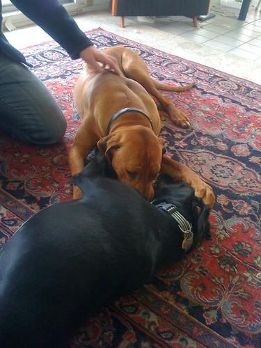 Juno & Oscar