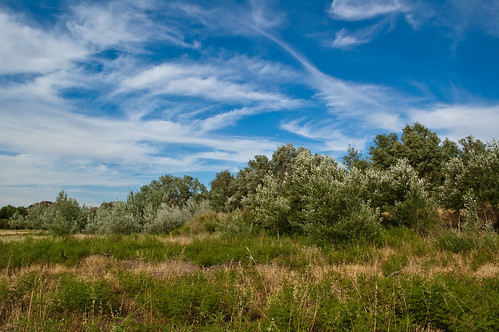 Campo, cielo y nubes (II)