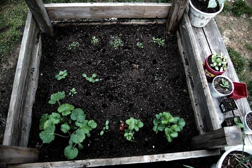 The Mother Plot - 16 square feet of veggie love (hopefully).