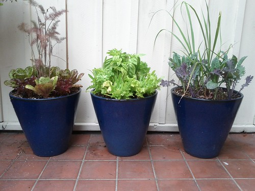 Lettuce Planters by Veronica in LA