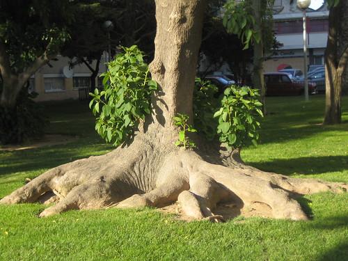 Árbol antiguo
