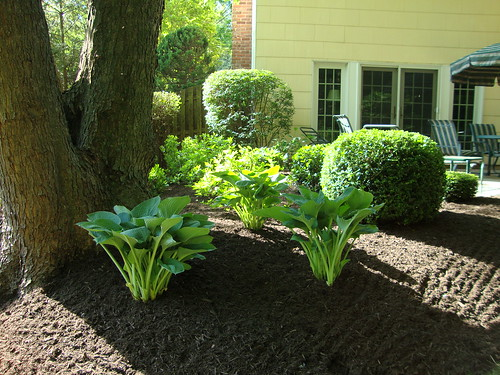 New Plantings