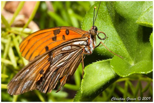 "Mariposa • <a style=""font-size:0.8em;"" href=""http://www.flickr.com/photos/20681585@N05/3193221120/"" target=""_blank"">View on Flickr</a>"