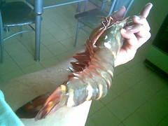 KK's giant prawn 1