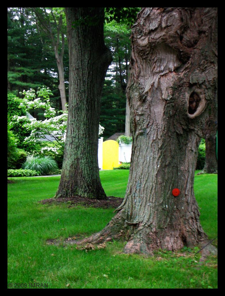 Trunked Tree Trunks Frame Door Frame, Mellow Yellow Splendor In The Grass - IMRAN™