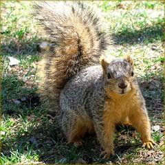 Squirrel in Downtown Denver