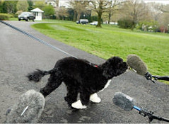 Bo Obama being interviewed by the press