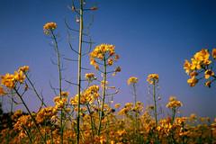 Hide away in the winter flower