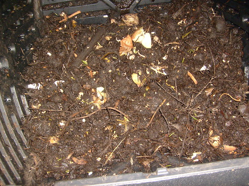 Close up of the compost so far. Note all the 6 week old brown stuff.