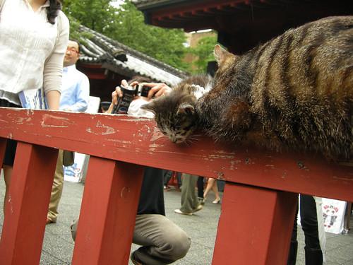 Kitty @Akamon of U-Tokyo