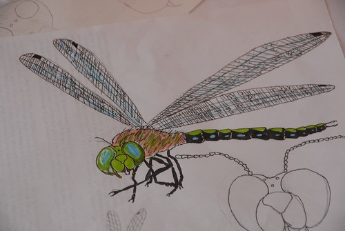 dragonfly by zak
