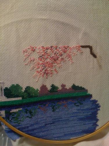Cherry blossom time!