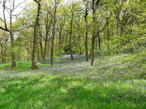 Ladies' Spring Wood