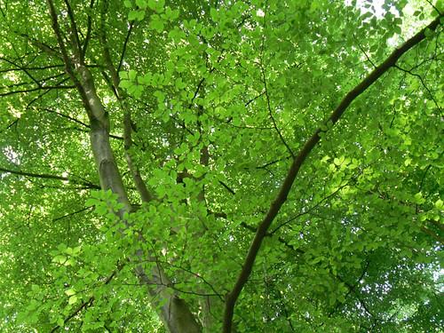 Winterbourne: Treetops