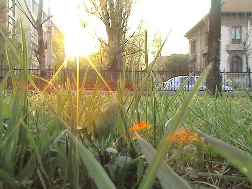 Soarele - astru in armonie cu natura