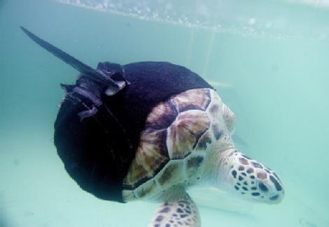 one flipper turtle in ninja suit