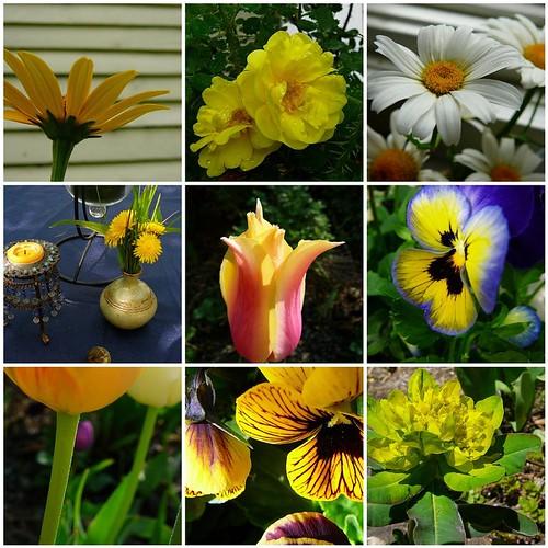 Garden Yellows