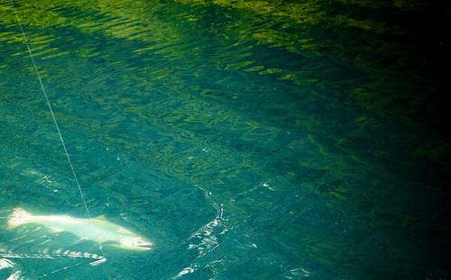 Fish on!, Yakutat Alaska