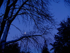 Moon Webs, Minneapolis, Minnesota, January 2009, photo © 2009 by QuoinMonkey. All rights reserved.
