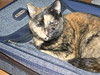 Elizabeth City - Mollie in Suitcase