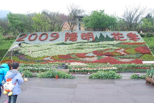 陽明山-2009陽明山花季