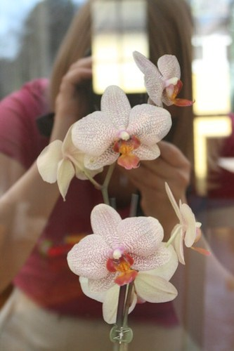 Orkidéfotografering